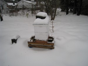 Snow on my Bee Hive