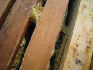 Burr Comb Between Hive Frames