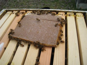 My Honey Bees finally start to eat the pollen substitute.