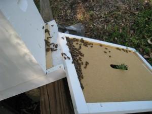 Honey Bees Returning Home