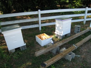 Post Bee Hive Split