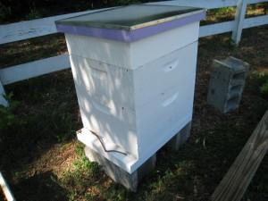 Queen-right Post-split Hive